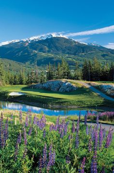 Mountain flowers on a golf course Bluebonnets!!!