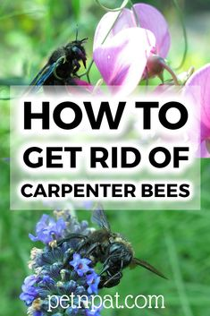How to get rid of carpenter bees? We've got a bunch of lethal & non-lethal bee eradication methods. Animals For Kids, Animals And Pets, Farm Animals, Animal Shelter, Shelter Dogs, Animal Rescue, Boring Bees, Getting Rid Of Bees, Animal Nutrition
