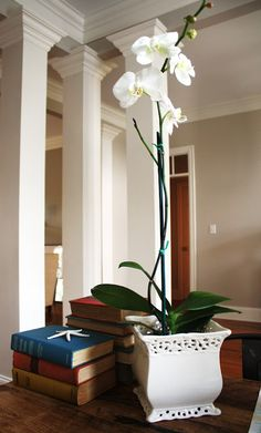 useful tips on how to keep an orchid