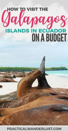 You don't need a cruise to see the Galapagos Islands in Ecuador. Save a ton of money with this budget-friendly alternative to Galapagos Islands travel! Visit one of the most popular vacation destinations in South America and save a ton of money. #SouthAmericaTravelPosts