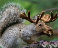 Yes, we have squirrels in Canada. Yes this is Canada's answer to the jack-o-lop  Lol