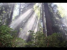 Beautiful Redwood Forest in 4K resolution! via - infinitylist.com