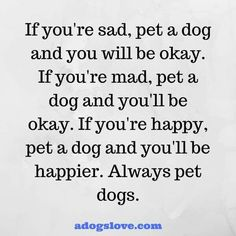 Always pet dogs