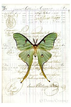Luna moth on ledger paper