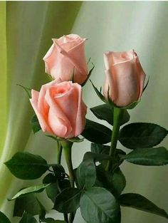 Nothing found for Benefits Of Rose Shrubs Beautiful Rose Flowers, Pretty Roses, Exotic Flowers, Amazing Flowers, Beautiful Flowers, Landscaping With Fountains, Rosa Rose, Rose Pictures, Arte Floral