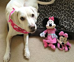 Daisy with her new Disney dog toys...super CUTE!