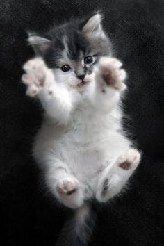 kitty paws!: Cats, Hug Me, Animals, Cuteness, Pet, Adorable, Kittens, Kitty