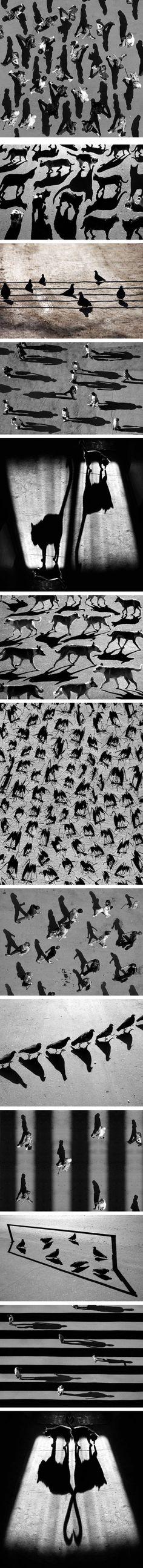 Alexey Bednij, les ombres photographiques > Creanum
