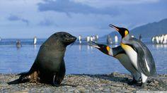 2016-12-15 - free desktop wallpaper downloads penguin - #12331