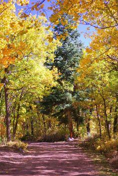 Fall - Westcliffe, CO
