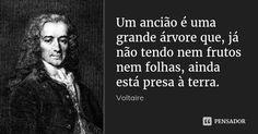 Um ancião é uma grande árvore que, já não tendo nem frutos nem folhas, ainda está presa à terra. — Voltaire