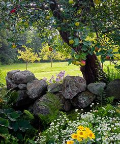 Stone walls and apple trees, old barns, inside farm homes, just lots of things country