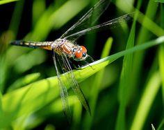 Title:  Dragonfly Details  Artist:  Rosanne Jordan  Medium:  Photograph - Photography