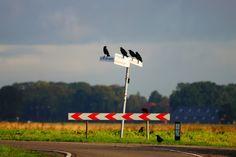 Natuurfoto Oost-Groningen: Waar gaan we heen?