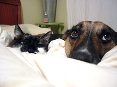 Cat + Dog in Bed