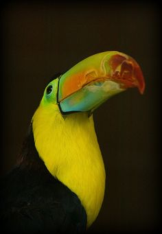 ~~Toucan play at that game !!!! (sorry!) by wendysalisbury~~