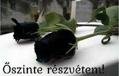 Dark red white rose flower roses seeds,roses from seeds,planting roses,growing roses from Flower Images Hd, Rose Images, Planting Roses, Planting Seeds, Growing Roses From Seeds, Roses Only, Rare Roses, Red And White Roses, Purple Roses