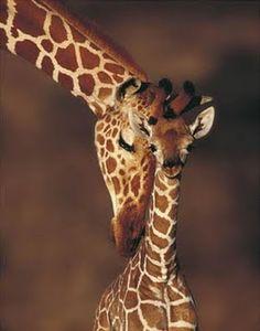 Pet a giraffe, as childish & silly as it sounds, it's true lol.