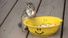 Image result for chipmunks animal