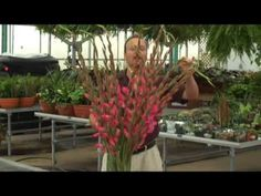 How to Arrange Gladiolus by Oberer's Flowers