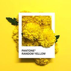 flowers, yellow et pantone image sur We Heart It Pantone Colour Palettes, Pantone Color, Aesthetic Colors, Aesthetic Images, Aesthetic Yellow, Yellow Art, Mellow Yellow, Baby Yellow, Art Jaune