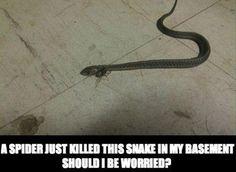 spider-kills-snake.jpg (620×452)