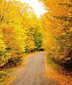 Autumn in Massachusetts.  Go to www.YourTravelVideos.com or just click on photo for home videos and much more on sites like this.
