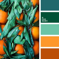An Emerald Green color palette is a stunning choice! The luxurious green color has been popping up in decor, fashion and everything in between. Orange Color Palettes, Color Schemes Colour Palettes, Nature Color Palette, Green Colour Palette, Green Colors, Orange Color Schemes, Spring Color Palette, Bedroom Color Palettes, Kitchen Color Schemes