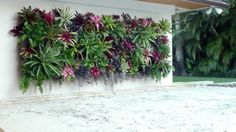 Exotic Decoration with tropical plants - how to care for bromeliads properly