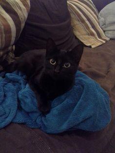 Noe Aurore #Perlenoire Ma chatte noire s'appelle gaby est c'est que du bonheur alors stop avec les prejuger par rapport a la couleur car c du n'importe quoi