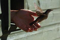 Bird is the Word. Zippertravel.