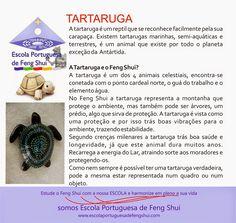 Escola Portuguesa de Feng Shui: TARTARUGA