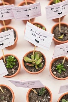 Succulent Escort Cards | photography by http://www.melissatuckphoto.com/ | floral design by http://www.lilygreenthumbs.com/