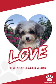 Love is a four-legged word, find dog lover quotes - here! Cute Small Dogs, Cute Cats And Dogs, I Love Dogs, Cute Funny Animals, Funny Animal Pictures, Cute Baby Animals, Little Puppies, Cute Puppies, Pet Dogs