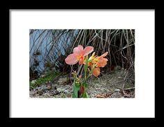canna, orange, flower, nature, bloom, interior design, michiale, schneider, photography