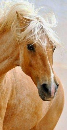 Beautiful Sheri Palmer - Google+