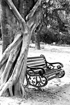 The Park Bench - Creative Art in Photography by TyaGem  Creations in Portfolio Nature / Reflection Photography at Touchtalent
