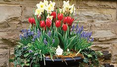 Cheery containers that herald spring