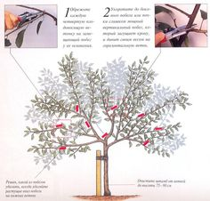 Pruning Fruit Trees, Summer House Garden, Goat Farming, Garden Trees, Small Trees, Apple Tree, Green Life, Trees And Shrubs, Growing Plants
