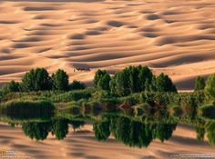 National Geographic's Photography Contest 2010 Oasis. (Photo and caption by Nam In Geun) Photographie National Geographic, National Geographic Photography, Wildlife Photography, Desert Oasis, Belle Photo Nature, Images Cools, National Geographic Photo Contest, Cool Pictures, Cool Photos
