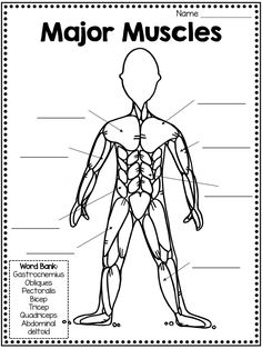 Muscular System Labeled, Muscular System For Kids, Types Of Muscles, Major Muscles, Muscles Of The Body, Human Body Unit, Human Body Systems, Pe Lessons, Health Lessons