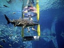 Aquarium Diving, Aquarium Snorkeling, Ocean Floor Walking - uShaka Marine World. Ushaka Marine World offers adventurers three unforgettable experiences.