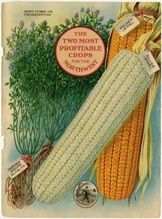 According To This Beautiful Image Found In The 1920 Farmer Seed And Nursery Catalog