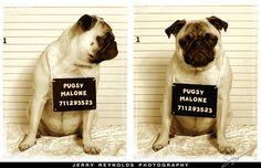 WANTED! Pugsy Malone
