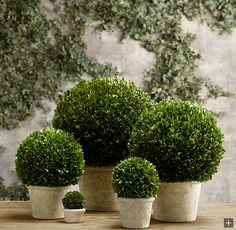 wHAT IF WE DID SOMETHING LIKE THIS IN THE GAPS OF OUR SHUBBERY? Beautiful Buxus - try our artificial version! Maintenance free and 100% botanically accurate!