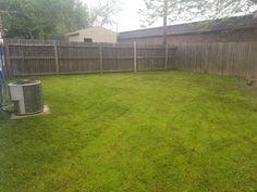 Back lawn Superior Service, Lawn, Plants, Plant, Planets, Grass