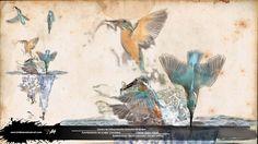 matín pescador, photoshop infografía alcedo atthis