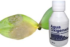Como Salvar uma Orquídea Doente, Tratar de orquídeas exige que você compreenda que elas dotadas de um sistema imunológico como os animais e que você pode