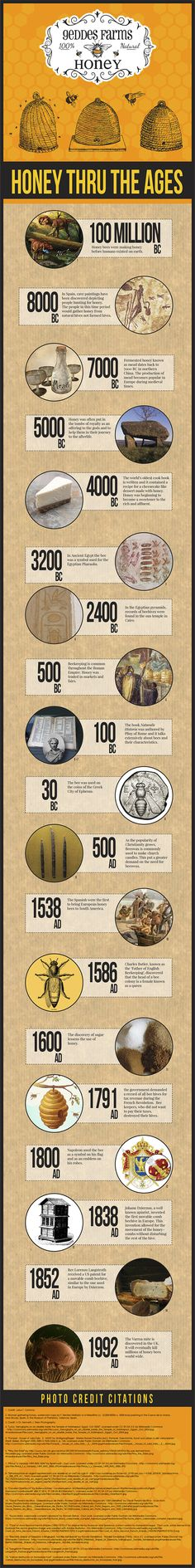 Honey Through the Ages Infographic | Geddes Farms