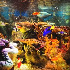 Tropical fish @NEAQ